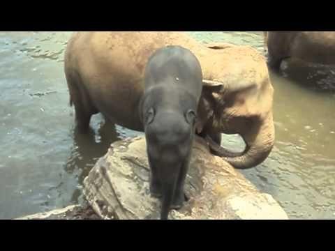 Sri Lanka -  Elephant Rub