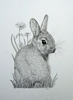 Original Mounted Pencil Drawing Of Baby Bunny Rabbit With Daisy