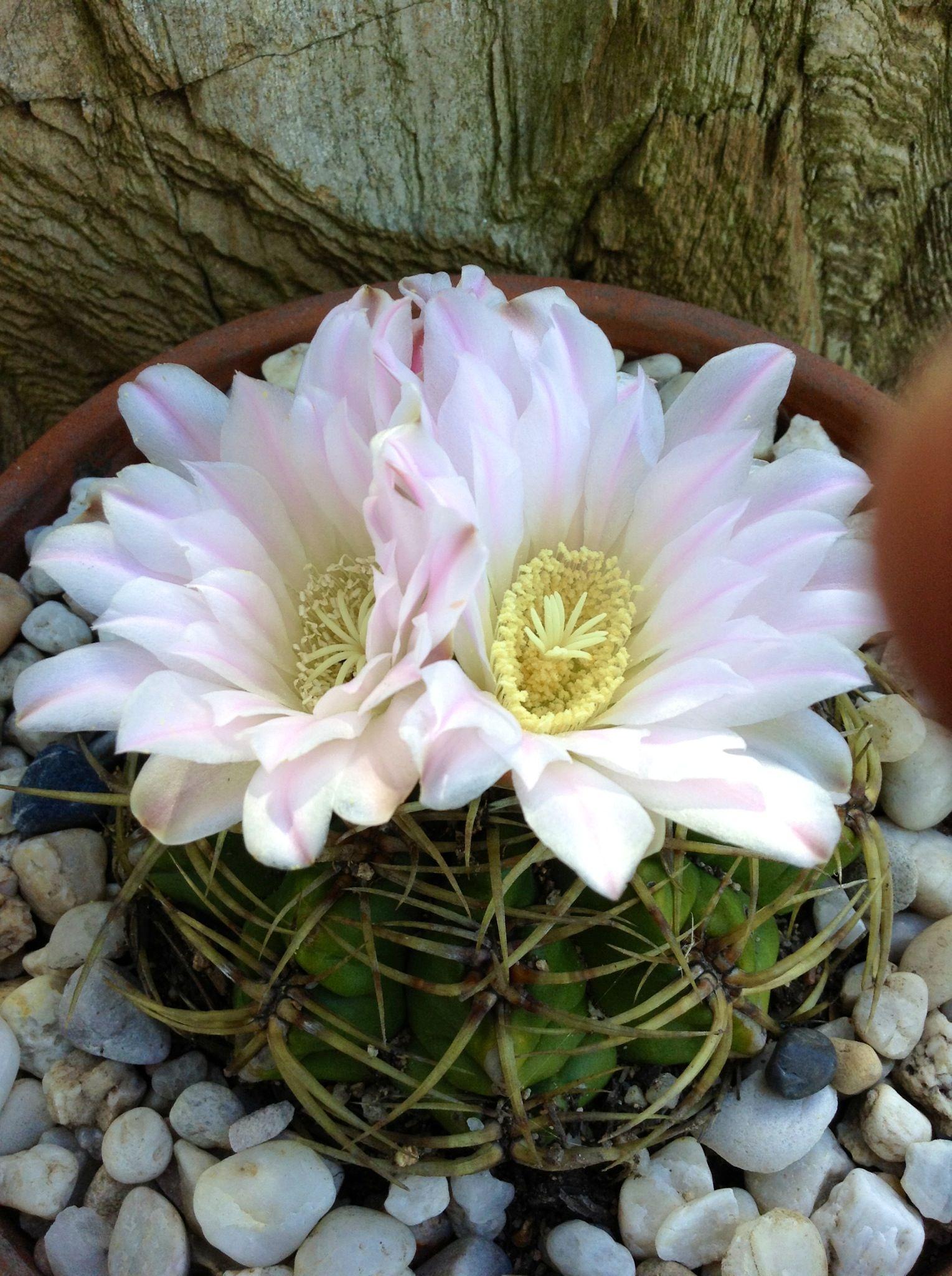 d70d6b3337615ff86051fafbebf56b9e Luxe De Fleurs De Jardin Des Idées