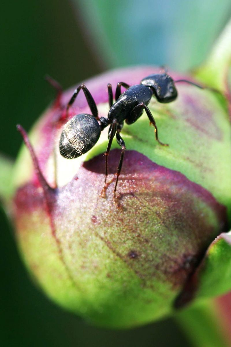7 Pretty Plants That Can Repel Biting Bugs Naturally in ...