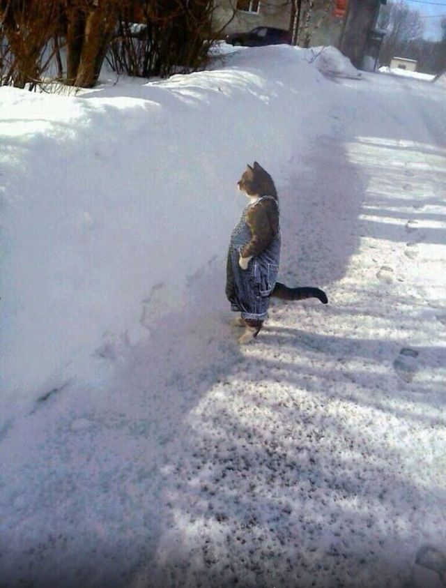 Cat Wearing Bib Overalls In The Snow Funny Animal Memes Funny Animal Pictures Funny Animals