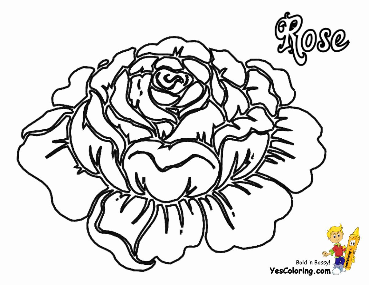 Roses Coloring Books Beautiful Rose Flowers Coloring Pages Free Yescoloring In 2020 Flower Coloring Pages Coloring Pages Rose Coloring Pages