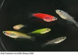 plenty of fish google search