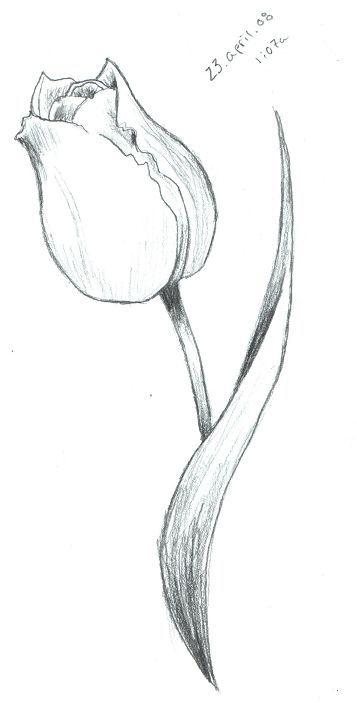 tulip sketch by scarletrainxx on deviantart passion pinterest