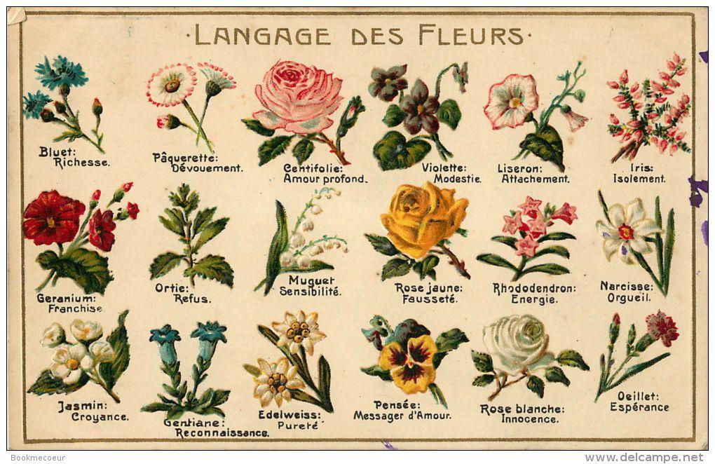 Langage des fleurs edelweiss id e d 39 image de fleur - Langage des fleurs iris ...