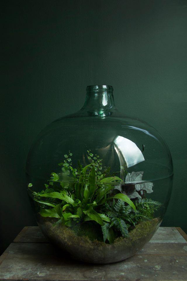 ken marten vintage fern terrarium ideen rund ums haus. Black Bedroom Furniture Sets. Home Design Ideas