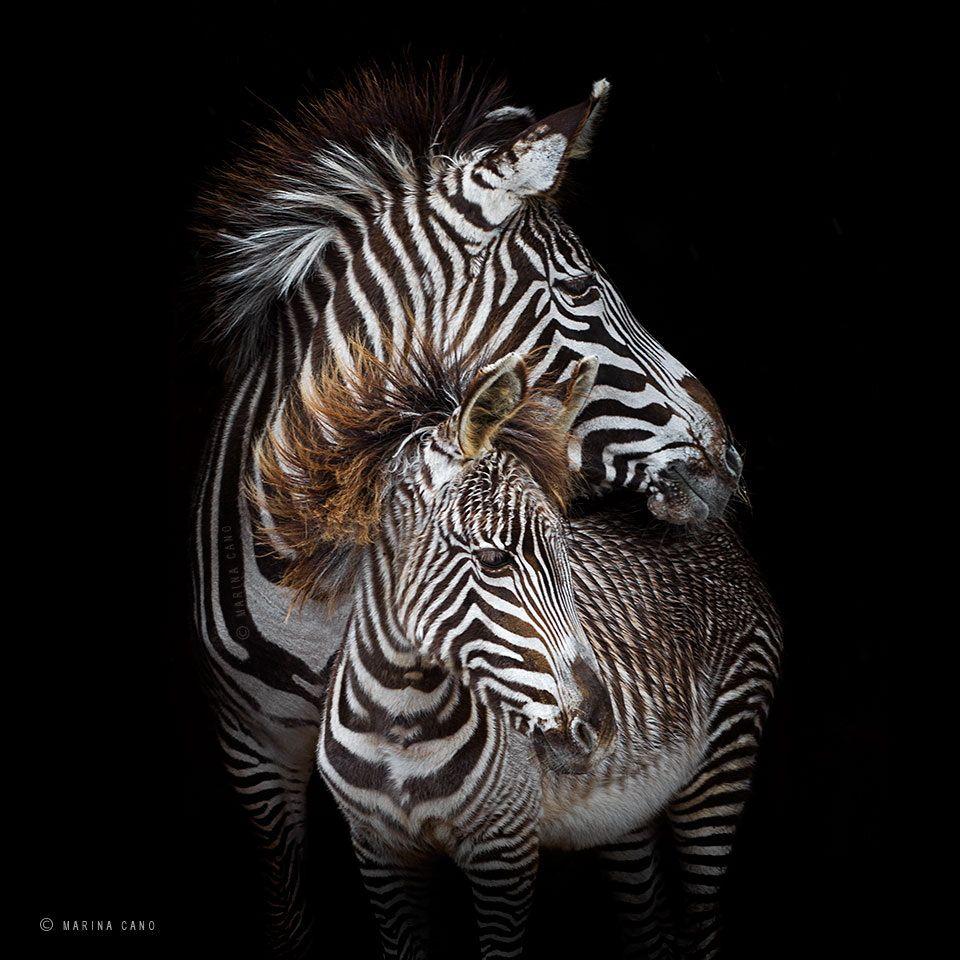 """Fifty Shades Of Grevy"" By Marina Cano (http://500px.com"
