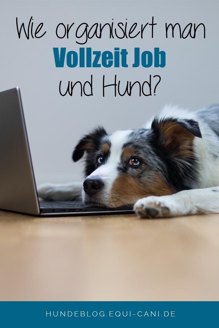 Vollzeit Job Und Hund Kann Das Gehen Hunde Hundchen Training Hund Anschaffen