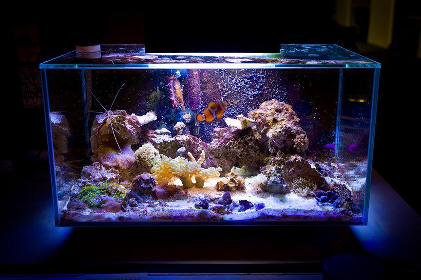 Saltwater aquarium setup powerhead for my edge reef for Saltwater fish tank lights