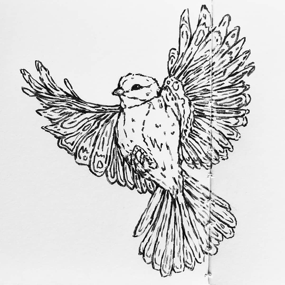Desenho de Animais Esboço drawing Desenho de Animais Esboço