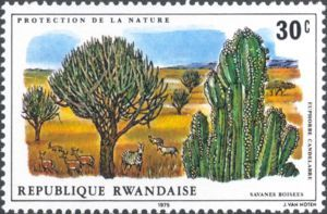 Antilopes and zebras in the savanna