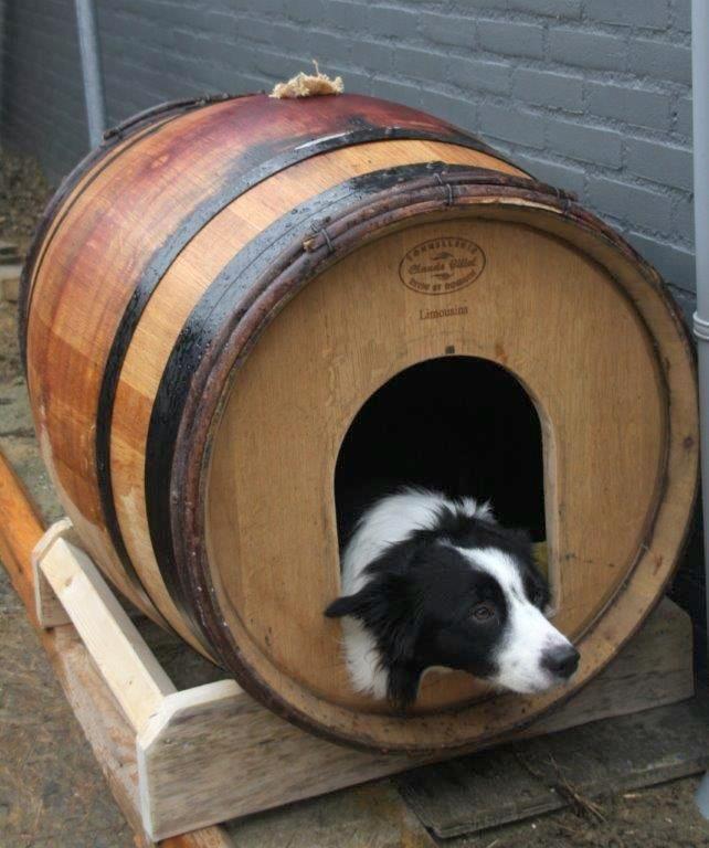 Lekker knus zo'n hondenhok van een eiken wijnvat en lekker warm. Duurzaam hergebruik van wijnvaten.