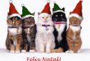 Mensagens de Natal 2017 e Frases (AS MAIS LINDAS!!!)