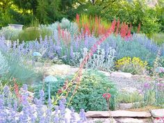 Water efficient landscapes can be beautiful this is a  example of a xeriscape garden.