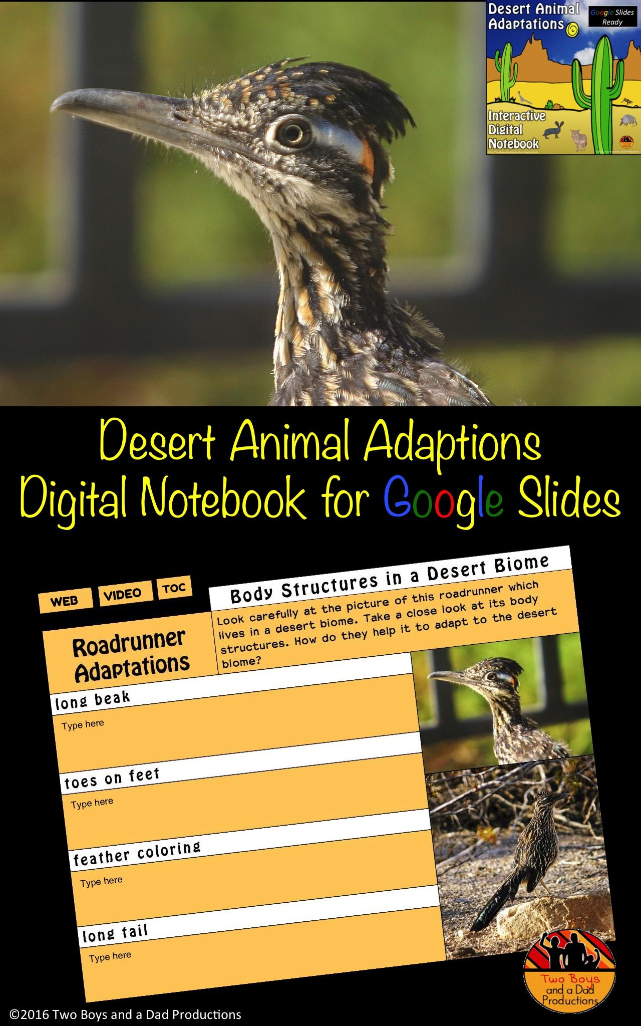 Desert Animal Adaptations Interactive Digital Notebook For