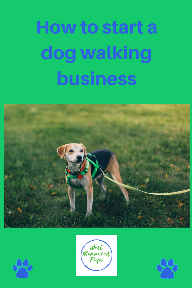 How To Start A Dog Walking Business Dog Walking Business Dog