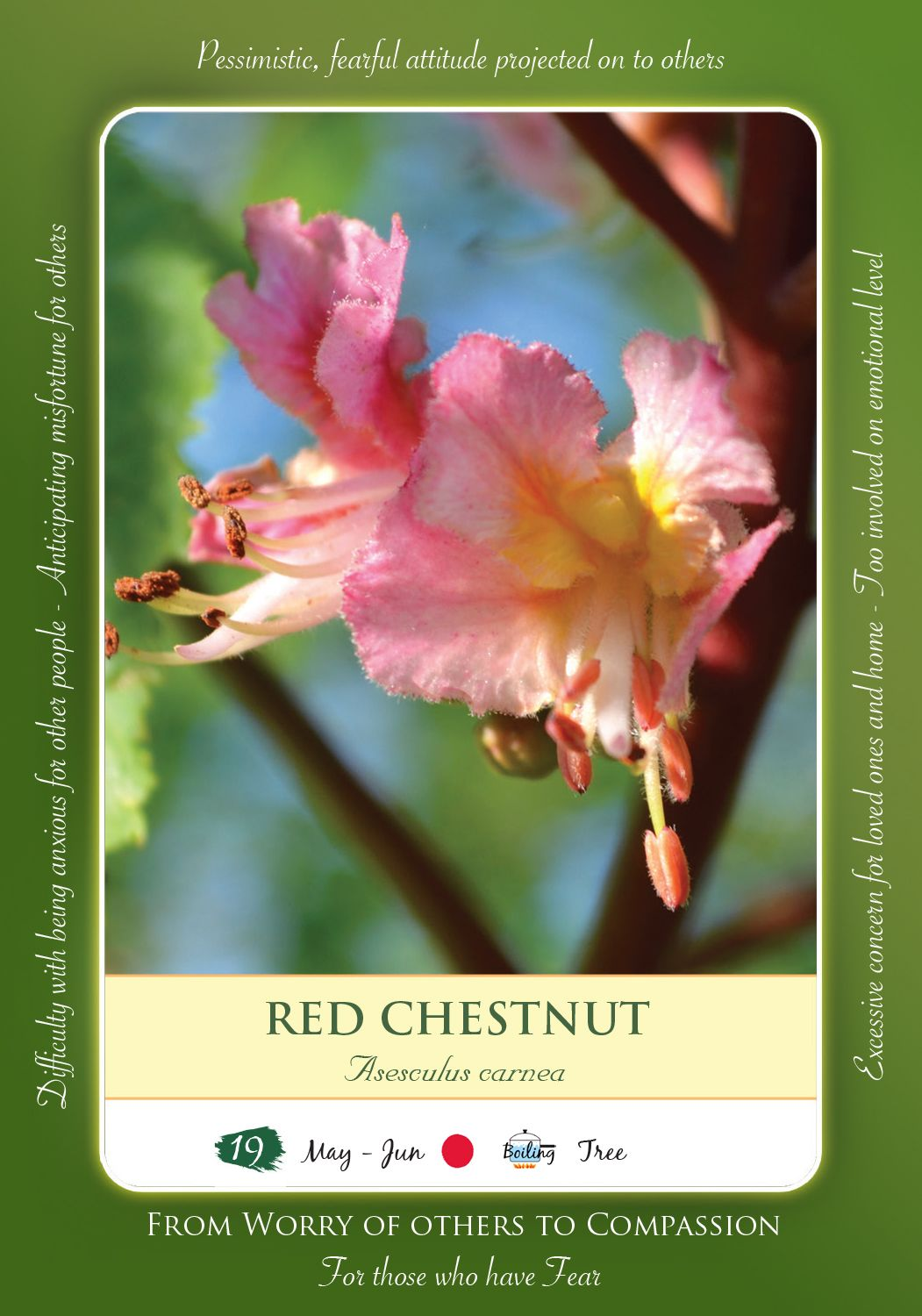 Bach Flower Remedy Red Chestnut Bach Pinterest Remedies