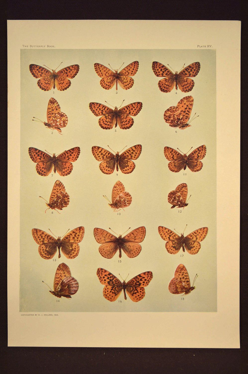 Funky Wall Decoration With Butterfly Image - Wall Art Collections ...