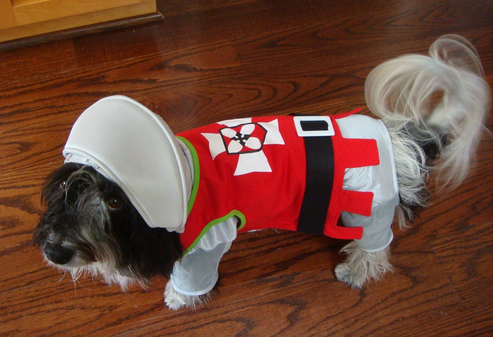 To Dog With Love Halloween Costumes And Pawpawty Fun Halloween