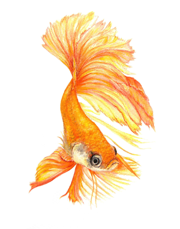 Goldfish Print Watercolor Wall Art Digital Print Printable