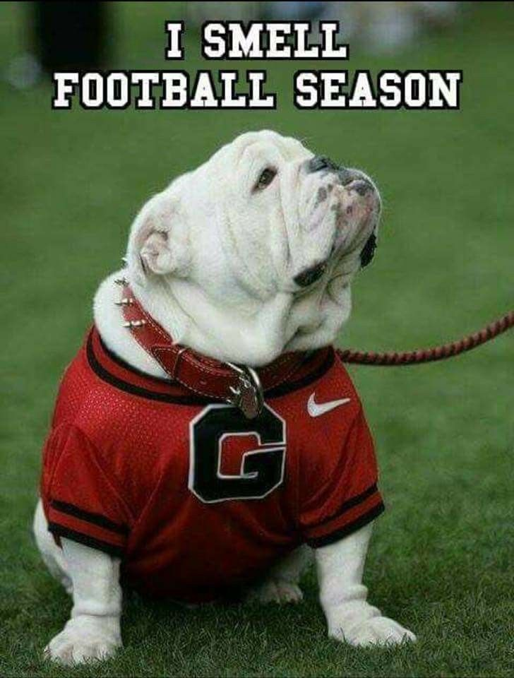 Pin By Linda Sikes On Dogs Cute Bulldogs Bully Dog Funny