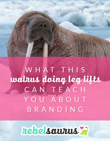 You may not think this funny video of a walrus doing leg lifts and aerobic exercise has anything to do with business or branding, but I can assure you, it does.  Click through to find out how!