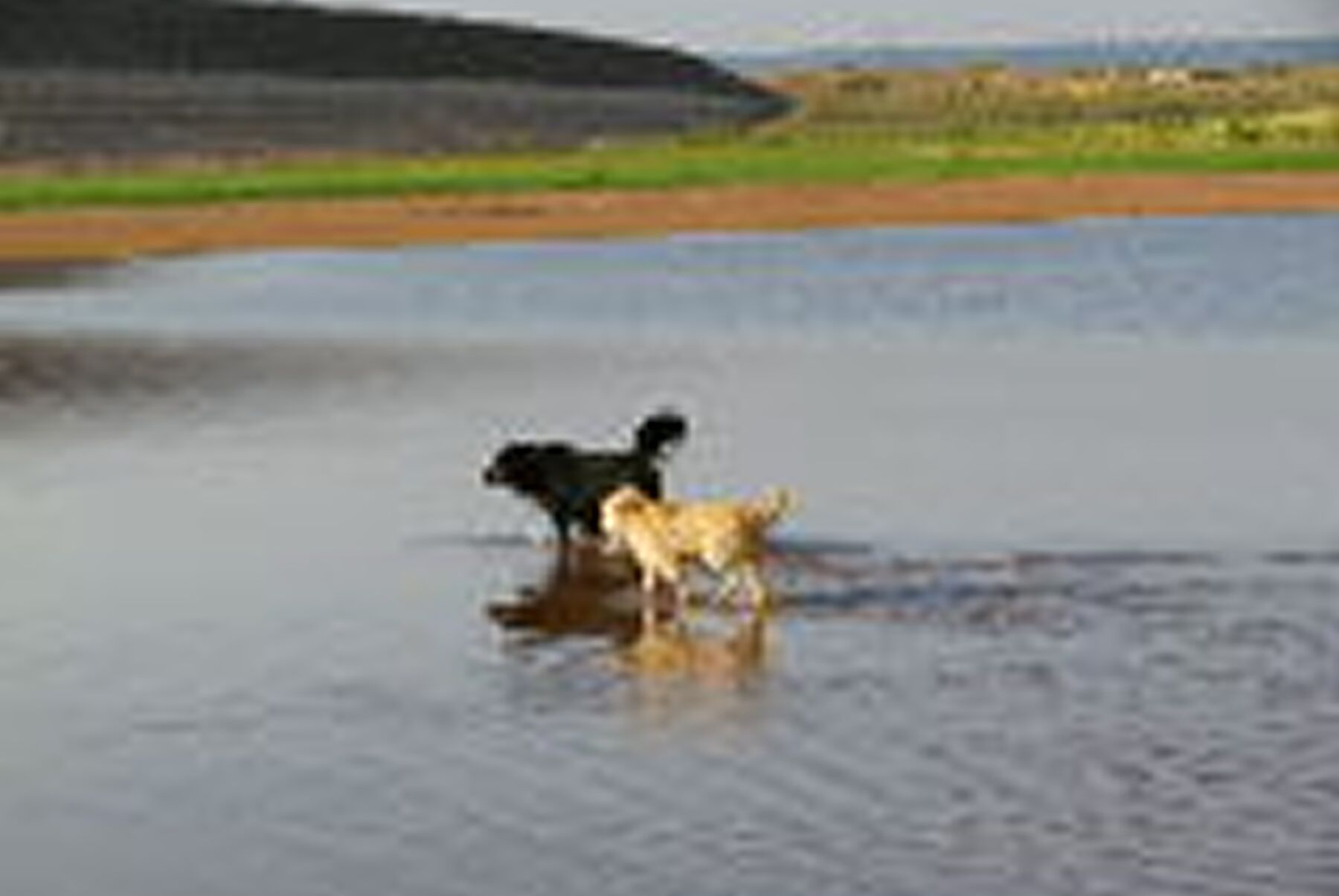 My dogs at the lake.