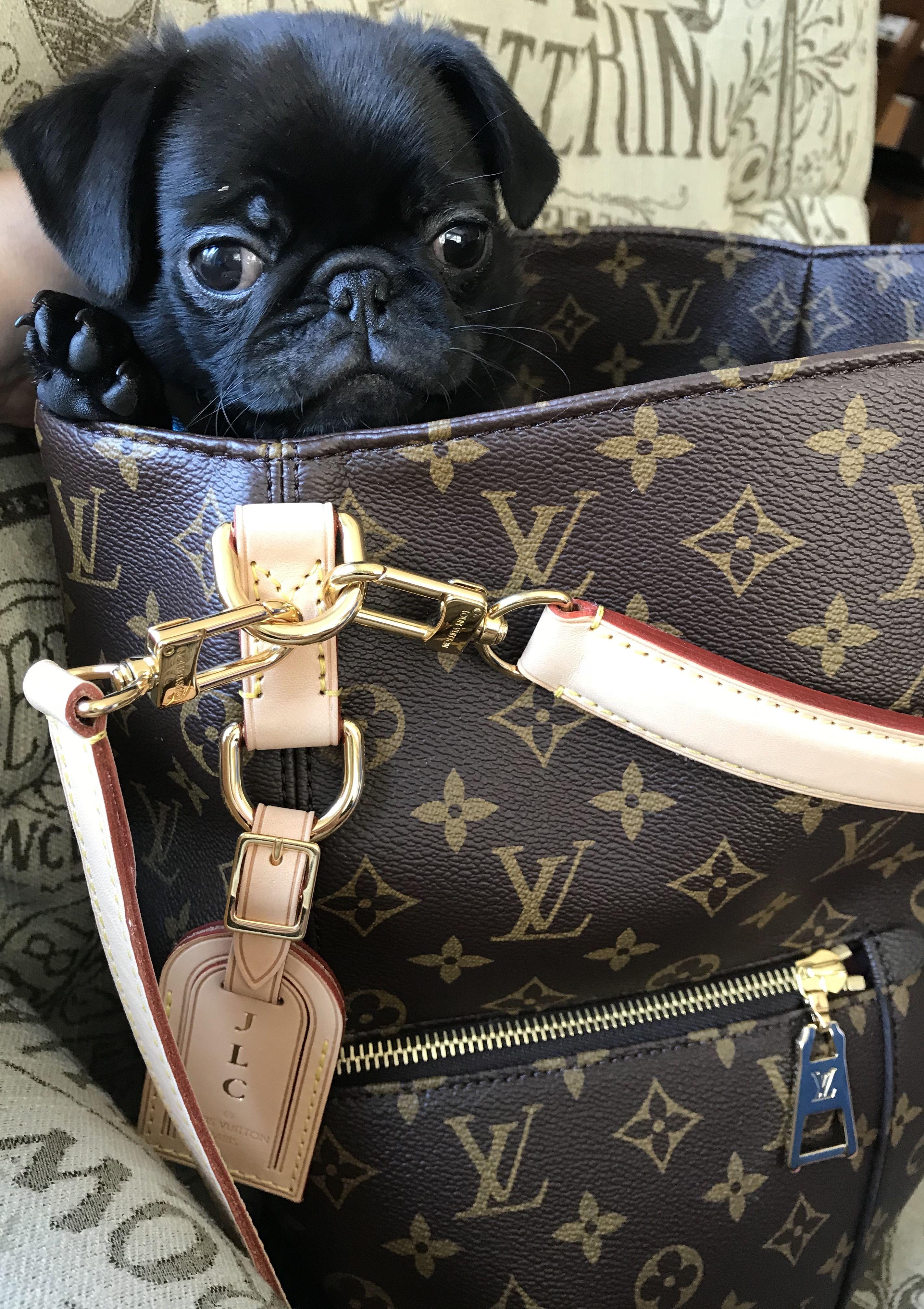 Pug In A Purse My Black Pug Puppy Relaxing In My Louis Vuitton Melie In Monogram Black Pug Louis Vuitton Louis Vuitton Monogram