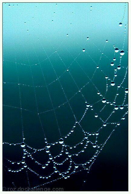Raindrops On Spiderweb クモの巣 クモ 蜘蛛の巣