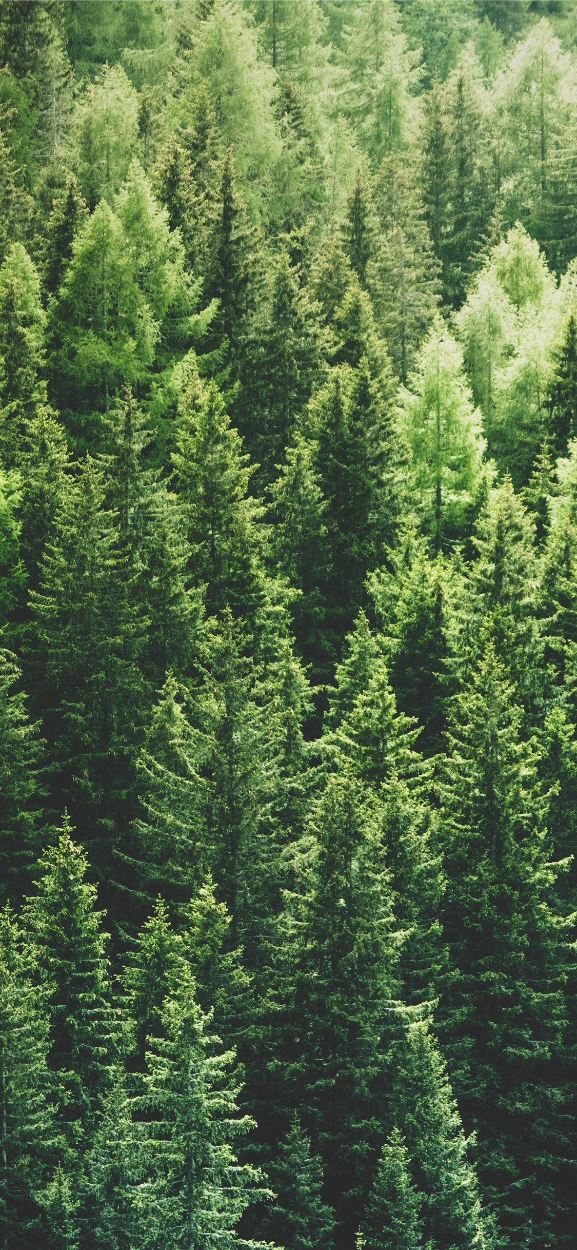 Green Pine Trees In Forrest Iphone 11 Wallpapers Tree Hd