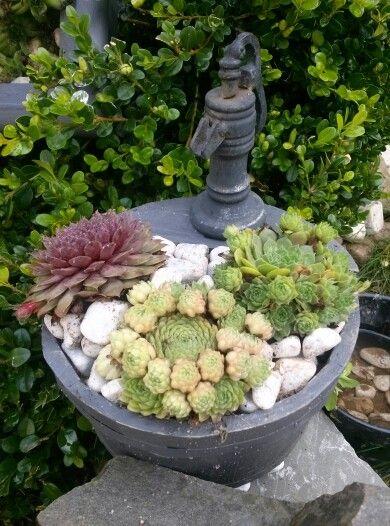 Kleiner Brunnen bepflanzt