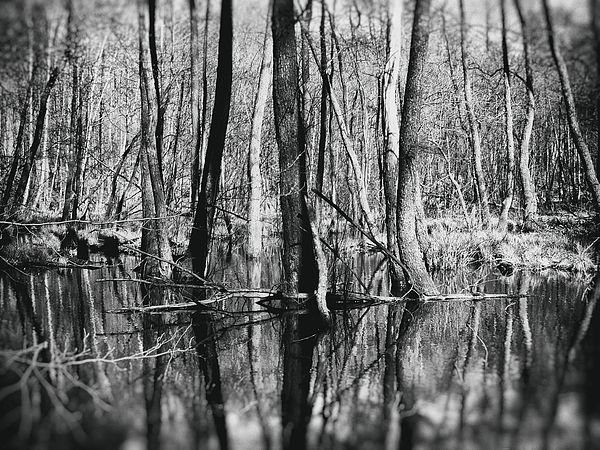 Nature photography black and white photography art for sale home decor wall