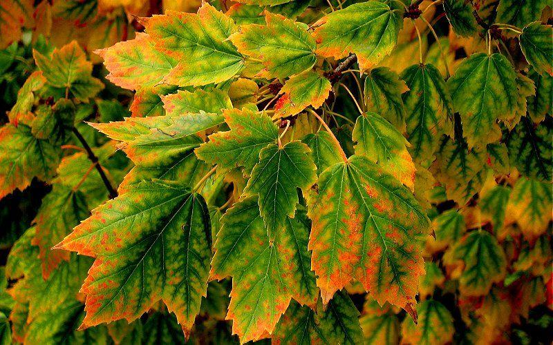 Arboles y Flores Hojas otoño FOTOGRAFIAS Pinterest Hoja, Otoño