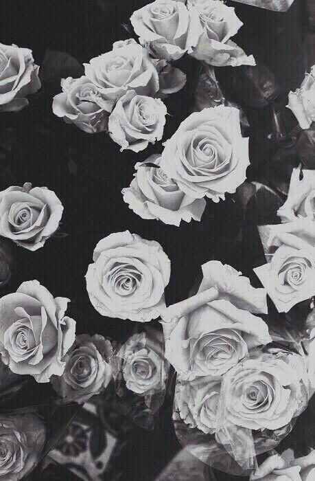 Epingle Par Mara Scurtu Sur Fond D Ecran Fond Decran Fleur Fond D Ecran Noir Et Blanc Photographie De Fleur