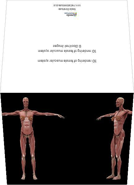 19+ 3D rendering of female muscular system. Greetings Card. 3D rendering of female muscular system.
