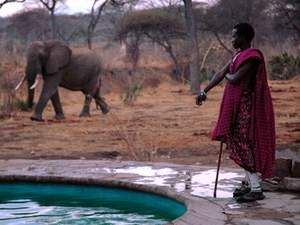 Because you can swim while a Massai warrior protects you and elephants walk past.