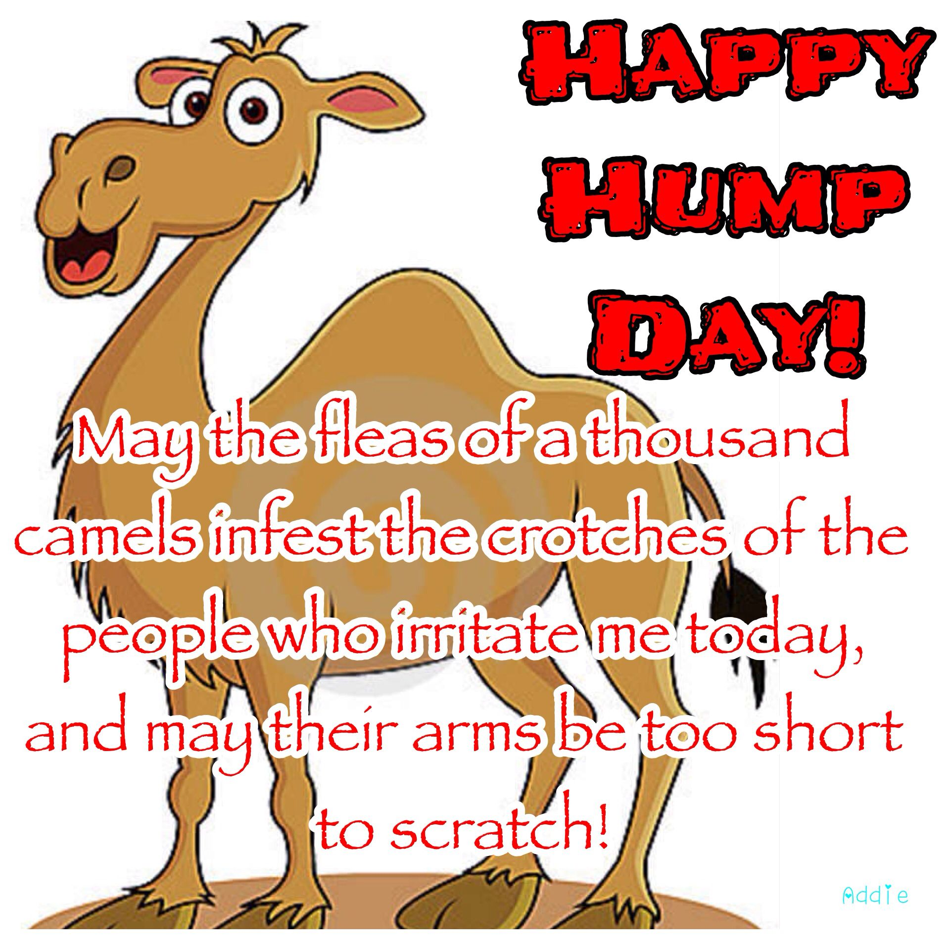 Hey you made it through the middle of the work week happy hump of a thousand camels infest the crotches of the people who irritate me today and may their arms be too short to scratch happy hump day wednesday humor kristyandbryce Images