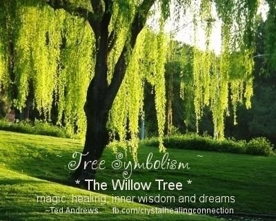 Willow Tree Medicine Magic Healing Inner Wisdom And Dreams Ted