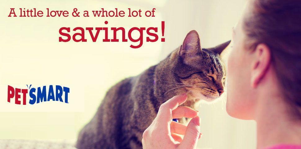 Tips For Understanding Your Cat Petsmart Grooming Coupons Petsmart Petsmart Grooming