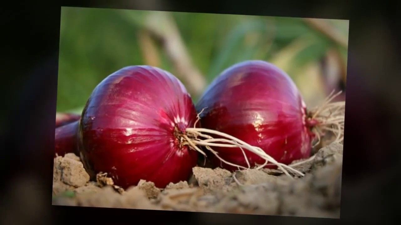 Health benefits of onions how onions are good for health