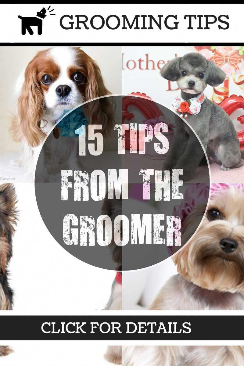 Your Dog Doesn T Like Bathing Grooming Want To Know More