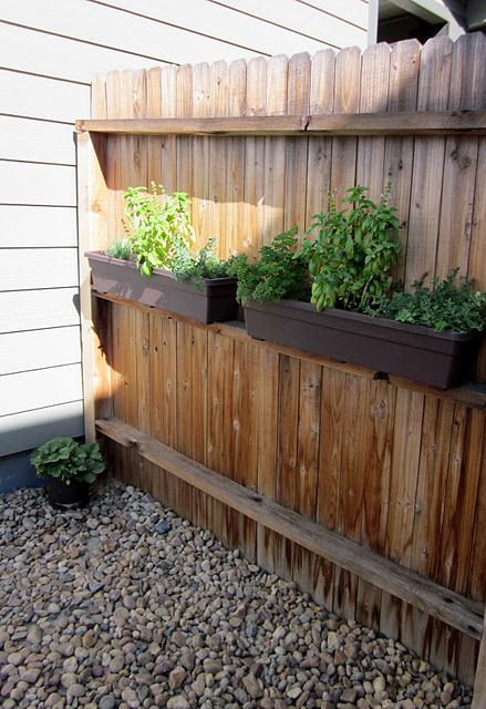 Growing herbs. I could do this on our back fence! Right?! Ha