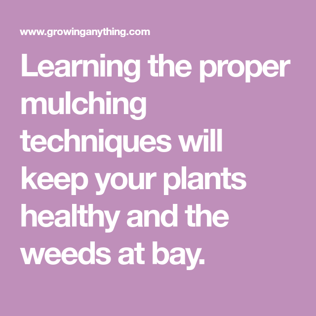 Deep Mulch Gardening , Learning The Proper Mulching Techniques Will Keep Your Plants