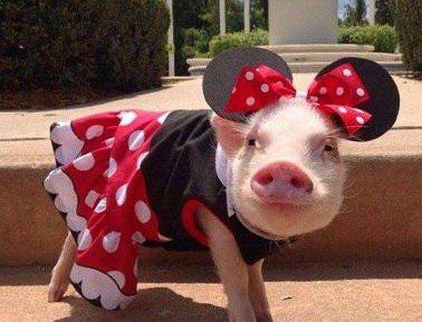 Funny cute pigs on tvoydosug.com | pigs | Pinterest ...
