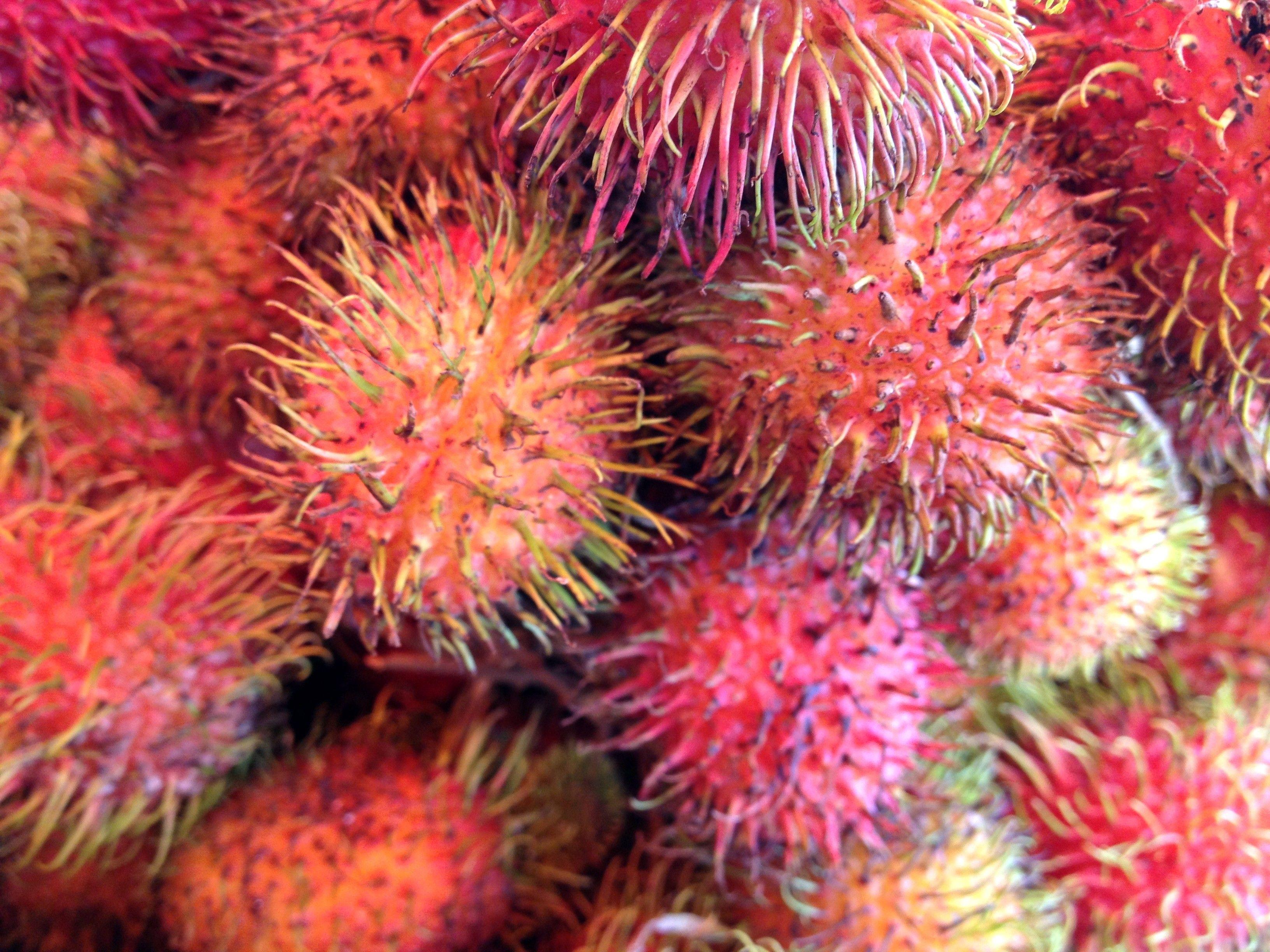 Süsse Versuchung. Saftige Litschis aus Borneo