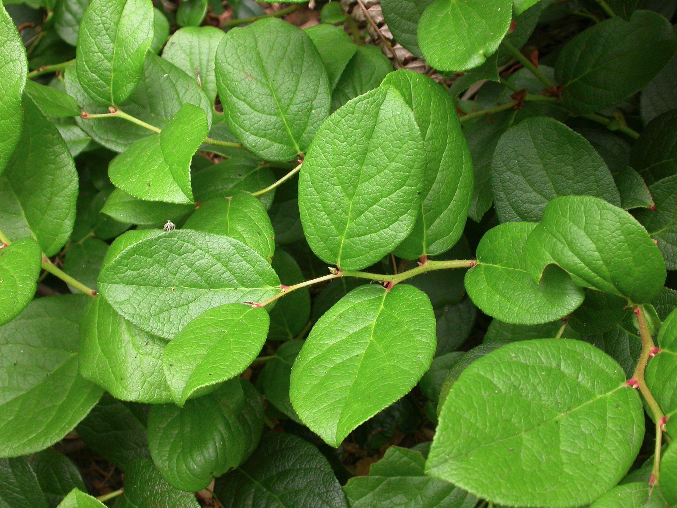 native plants that thrive in northwest gardens gardening