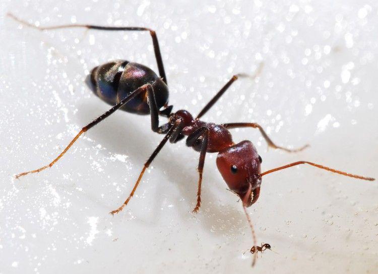 Cute Dieser geniale Trick hilft gegen Ameisen im Haus So r ckst du diesen unerw nschten G sten zu