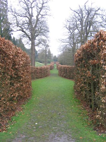 Beech Hedges At Chatsworth Beech Hedge Unique Gardens Hedges