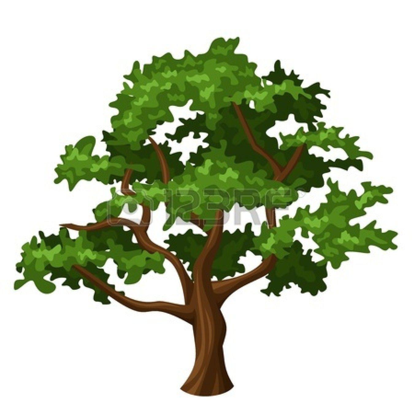 Stock Vector Oak Tree Drawings Fall Tree Painting Birch Tree