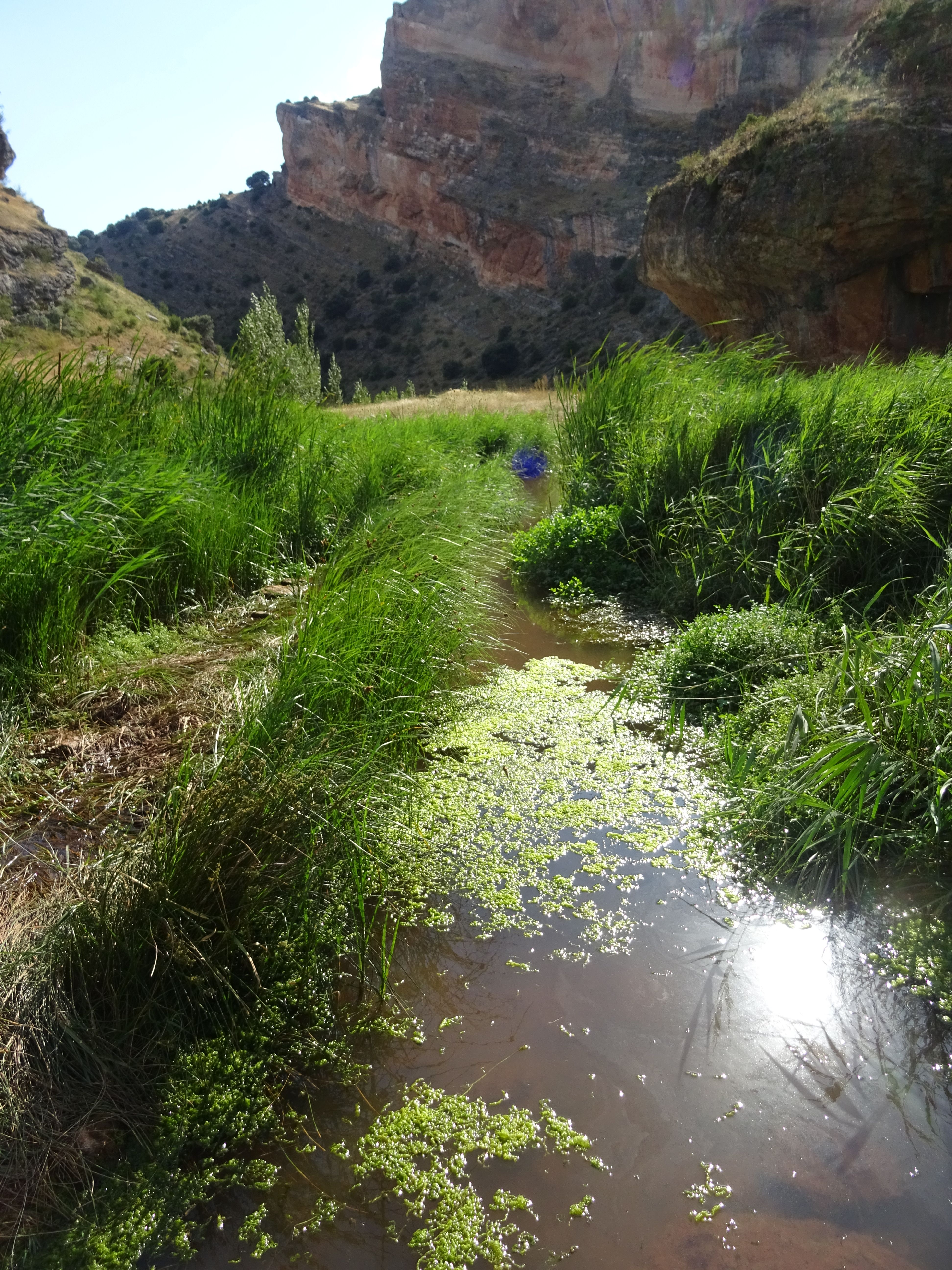 Trozo del río salado lleno de hierbas y maleza que dan cobijo a aves, anfibios y otros animales.
